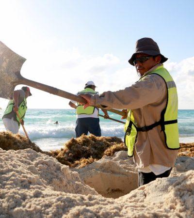 Retiran sargazo en siete playas de Cancún
