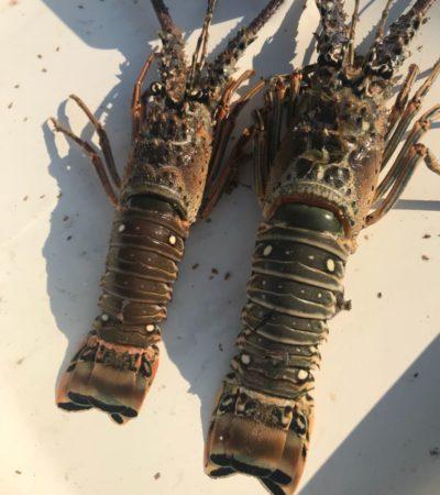 Cuatro detenidos y dos embarcaciones decomisadas por pesca ilegal de langosta en Chiquilá