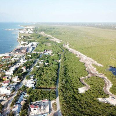 Ambientalistas buscan frenar la devastación de manglares en Puerto Morelos