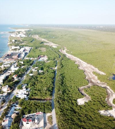 Video muestra devastación de 3.6 hectáreas de manglar a un costado de Hotel El Cid en Puerto Morelos