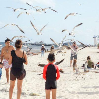 Puerto Morelos está al 90 por ciento de ocupación hotelera