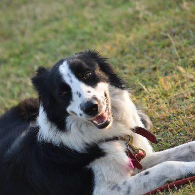 Mascotas con sus amos correrán dos kilómetros en el 'Perrotón' de Playa del Carmen