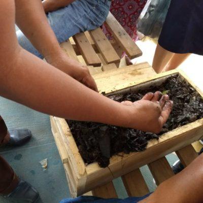 Por las semillas nativas unen esfuerzos y rechazan uso de transgénicos en la Península de Yucatán