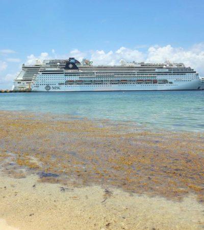 'MAREJADAS'DE SARGAZO ENVUELVEN A COZUMEL: Frente frío y fuertes oleajes provocan arribo continuo de algas a la isla