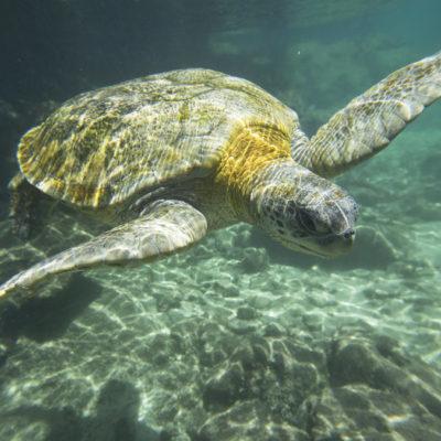 El nuevo proyecto cercano a Xcacel-Xcacelito no toca ninguna parte del área de protección de la tortuga, dice Marisol Vanegas