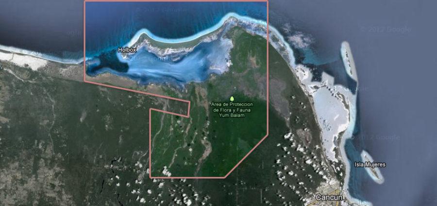 Con 1,200 firmas en redes sociales, buscan la protección de Yum Balam y que se prohíba centro de población en Isla Grande Holbox por ser área natural protegida