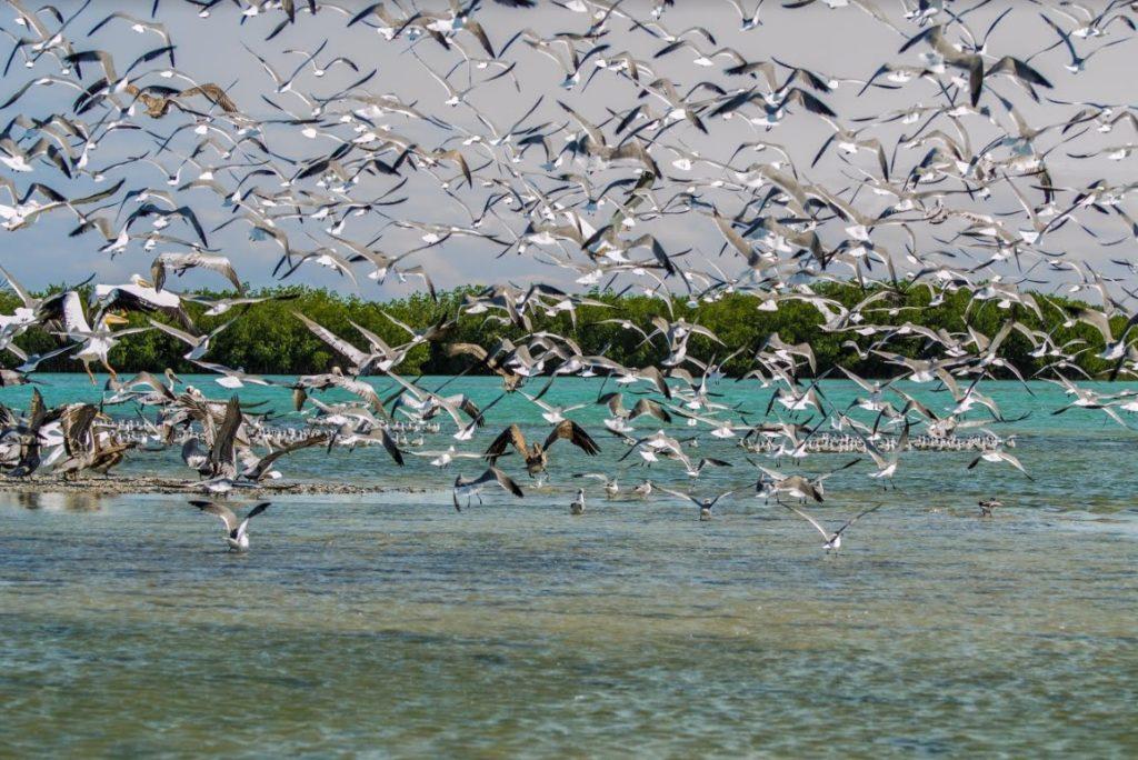Aplican Planes de Manejo para conservar aves acuáticas y playeras
