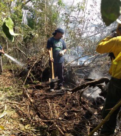Tras cuatro días de lucha, sofocan incendio forestal en Felipe Carrillo Puerto