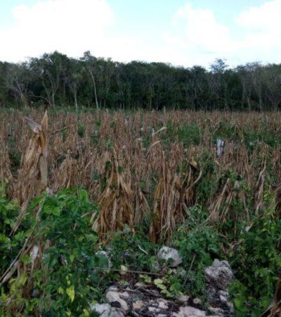 Retomarán rituales de siembra en San Francisco Aké, en la Zona Maya