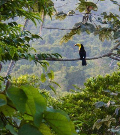 La selva del sureste mexicano: el gran jardín de los mayas | Por Carlos Meade