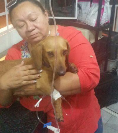 Defensores de animales levantan voz contra el maltrato en Mérida