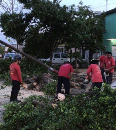 Tras la tormenta con granizo de ayer, atendió bomberos al menos 15 reportes de árboles caídos