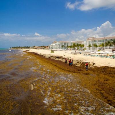 Autoridades chinas ofrecen ayudar con el sargazo en Playa del Carmen