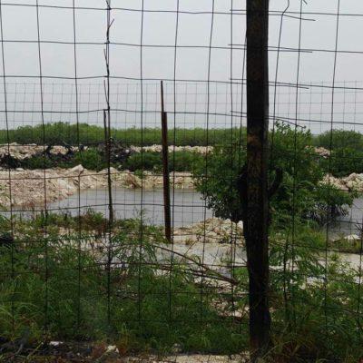 Firman para frenar devastación de 60 hectáreas de manglar en Puerto Morelos