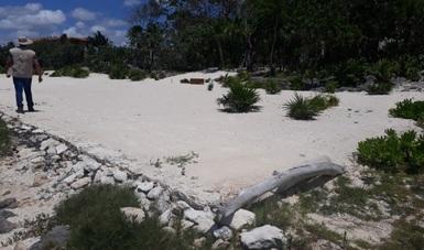 Clausura Profepa obras del proyecto 'Muelle Casa Osio' en Cozumel por no tener autorización en materia de impacto ambiental