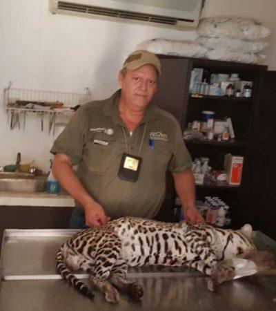 Detienen a hombre que mató un felino en un Área Natural Protegida de Tabasco; lo llevaba cargando en un costal
