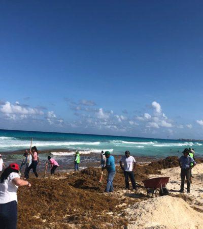 Playa Delfines se llena de sargazo en Cancún