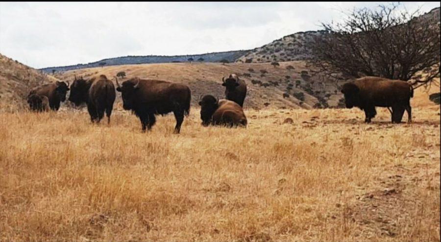 Aseguran cuatro ranchos con más de 170 hectáreas y animales exóticos a ex gobernador César Duarte