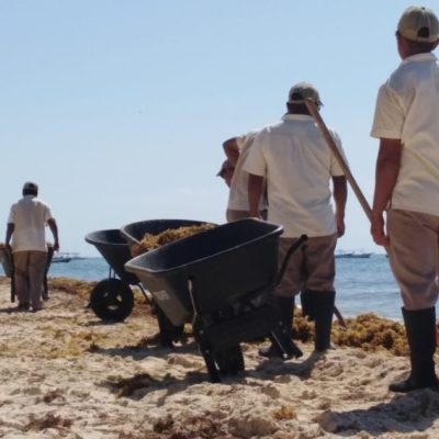 Maquinaria pesada para retirar sargazo es usada en zona de anidación de tortugas en Playa Mahekal
