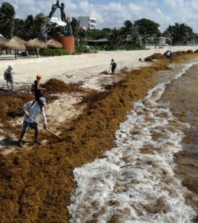 Hoteleros de Cancún y Puerto Morelos discuten cómo afrontar el arribo de sargazo; piden a la Federación 62 mdp