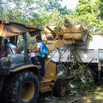 50 mil metros cuadrados de terrenos baldíos son limpiados por el Ayuntamiento de Solidaridad en los últimos 15 días