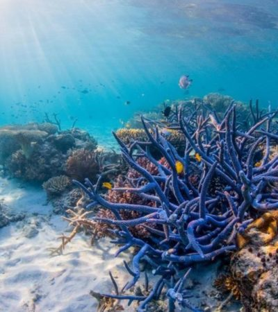 Certifican, previa capacitación, a prestadores de servicios turísticos para proteger mejor a los arrecifes