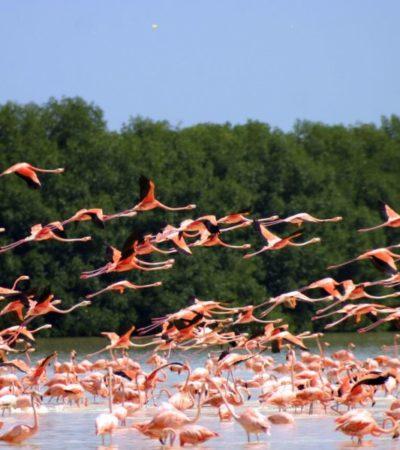 Celestún y Ría Lagartos, hermanadas por la celebración del Día Mundial de las Aves Migratorias