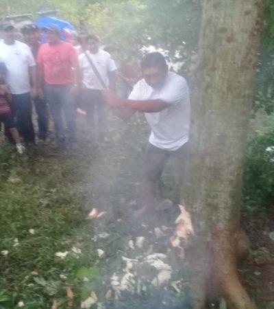 Cortan 'árbol sagrado de los mayas' en honor a San Isidro