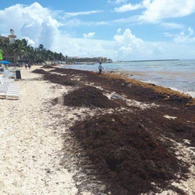 """""""Se necesitan mil 500 millones de pesos para recuperación de arenales"""": Alfredo Arellano"""