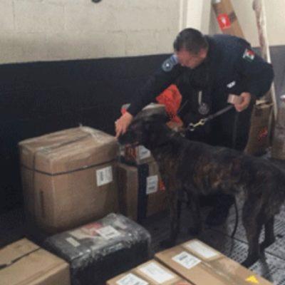 Hallan 2.5 kilos de heroína en empresa de paquetería en el aeropuerto de Cancún