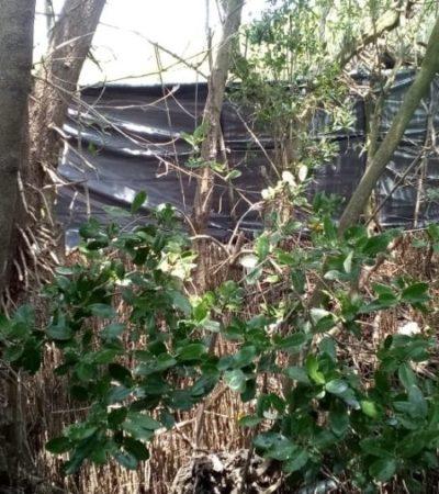 Inspectores de Medio Ambiente sorprenden a personas cortando manglar en predio donde la Profepa clausuró hace dos años