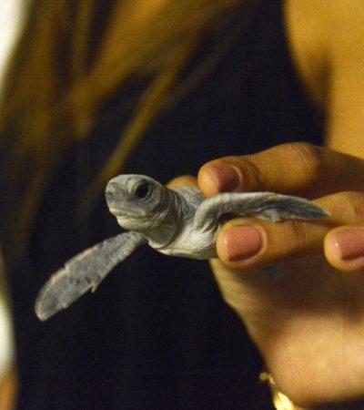 De noche, de día, en Benito Juárez, se protege a la tortuga marina