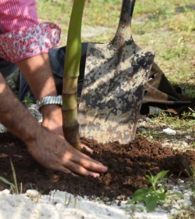 Desarrollo vertical evitaría una mayor deforestación en Playa del Carmen, dice el arbolista Rafael Reinoso Valdez