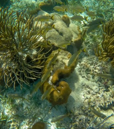 Lanzan primer concurso de fotografía 'Monitores del Arrecife 2018' para conmemorar el Año Internacional del Arrecife