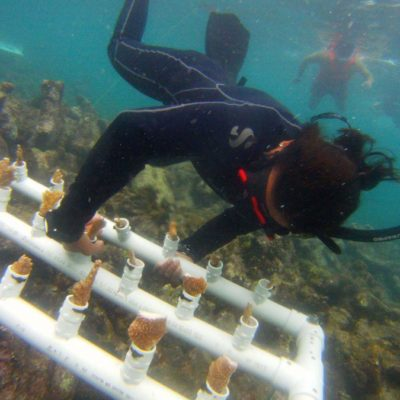 Arrecifes artificiales sí, pero dentro de proyecto integral, exigen náuticos de Playa del Carmen