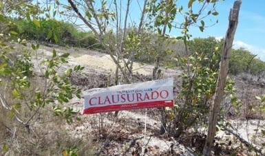 Clausura Profepa proyecto inmobiliario en el área natural protegida de Yum Balan en isla de Holbox