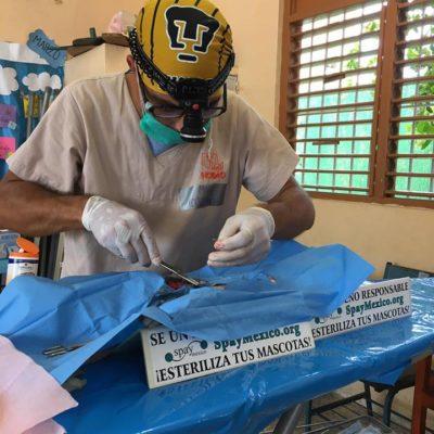 Coco's prepara campaña masiva de esterilización gratuita para perros y gatos; buscan castrar a mil animales este 2018 en Playa del Carmen