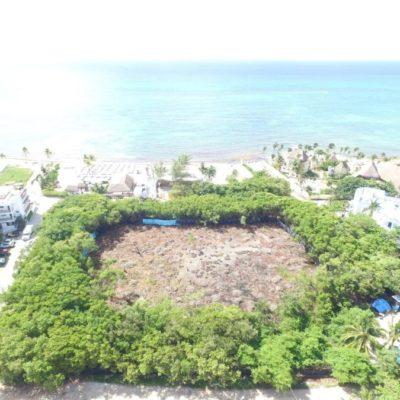 """ECOCIDIO EN PLAYA: En inspección de Profepa, justifican corte de manglar en calle Albatros al asegurar que la vegetación de la zona está """"fraccionada"""""""