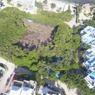 Ante ineficacia de Profepa, Moce Yax Cuxtal inicia campaña en redes sociales para salvar al manglar que están devastando en Playa del Carmen