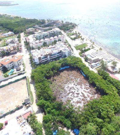 Moce Yax Cuxtal y el Consejo para el Manejo Integral Costero amplían denuncia en Profepa contra corte de manglar en Playa del Carmen; ambientalistas dicen que las reformas sobre Ley Forestal no proceden en este caso