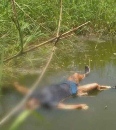 Hallan tres cadáveres flotando en el río Coatzacoalcos