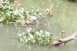 Sale a un velorio; tres días después aparece ahogado en un río