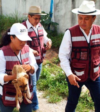 La Ley sobre el maltrato animal, se compromete Jesús Pool, será analizada cuando asuma como diputado
