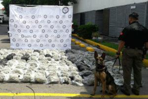 INTERCEPTAN DROGA PARA CANCÚN: Gracias a denuncia anónima, PGR decomisa en Guadalajara 312 kilos de mariguana oculta en 299 bolsas