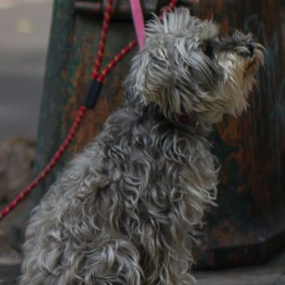 Ya venden mariguana para perros en EU y pronto para gatos; buscan mercado en México