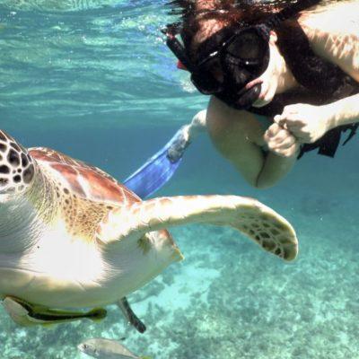 Las tortugas de Akumal, negocio de millones de dólares   Por Carlos Meade