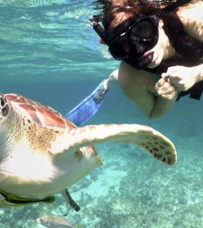 Las tortugas de Akumal, negocio de millones de dólares | Por Carlos Meade