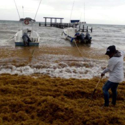 Recrudece recale de sargazo en Playa del Carmen por lluvias