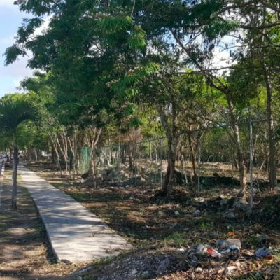Limpian más de 135 mil metros cuadrados de lotes baldíos para erradicar focos de riesgo en Playa del Carmen