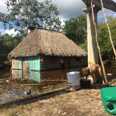 Asociaciones civiles recolectan víveres para atender a mascotas afectadas por la inundación en Chumpón; llaman a la población a donar alimento para mascotas y animales de corral